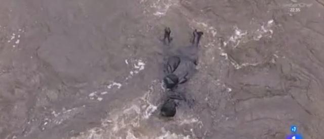 Ursula cade dal ponte - Una vita