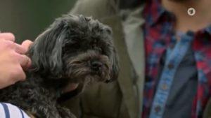 Uschi viene adottata da Boris e Tobias, Tempesta d'amore © ARD (Screenshot)