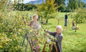 Franzi e Margit si occupano del loro frutteto, Tempesta d'amore © ARD Christof Arnold
